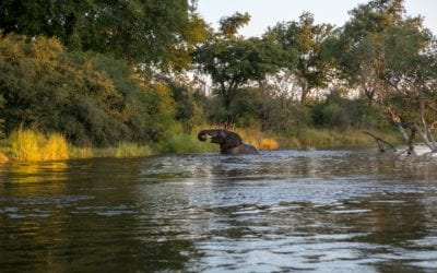 Zambia's Lower Zambezi National Park