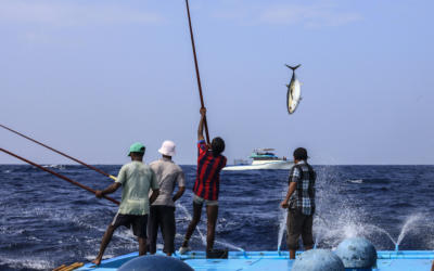Sustainable Fishing in the Maldives