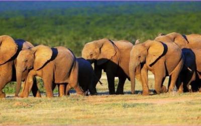 African Parks – Conservation Trailblazer