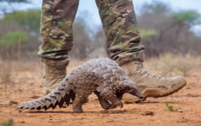 The World's Most Trafficked Animal!